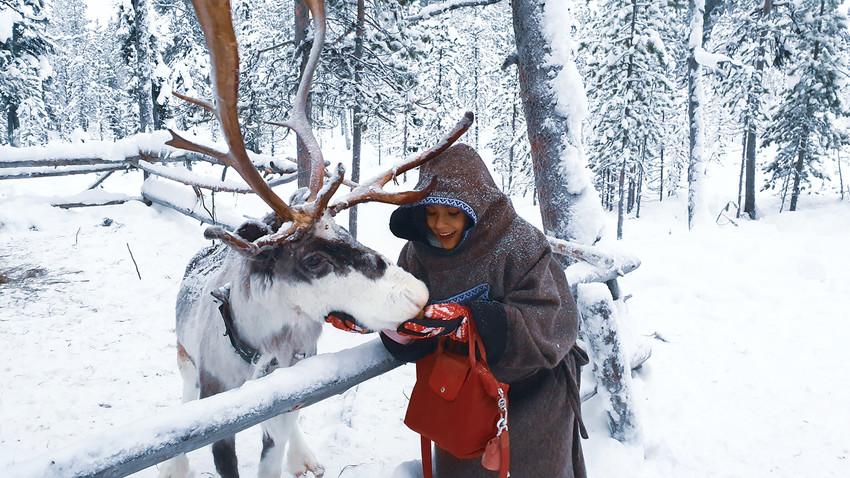 Seorang turis Indonesia memberi makan rusa kutub di Murmansk, Rusia.