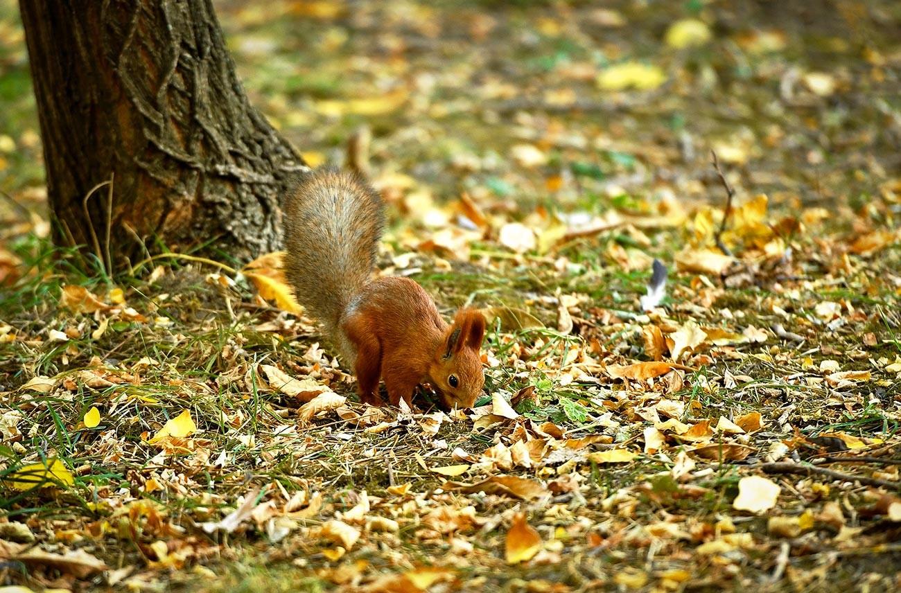 Fall in a Crimean park