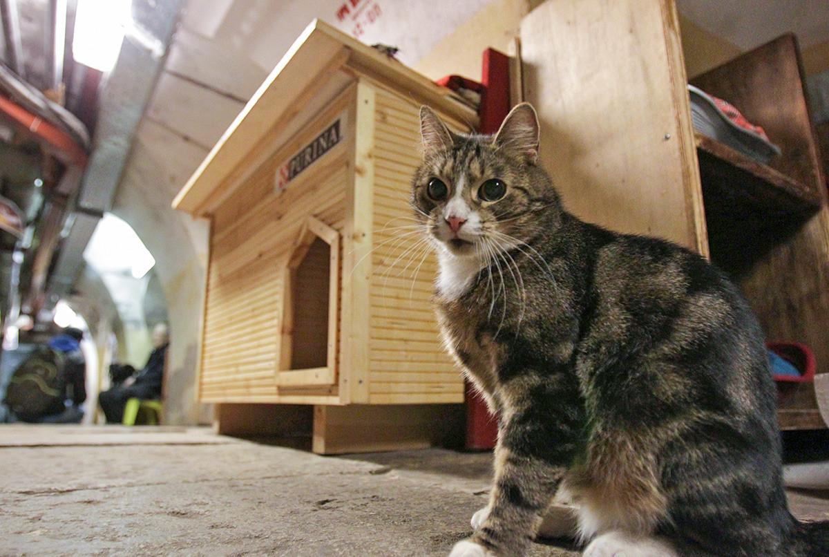 Кот в подвале Эрмитажа во время ежегодной акции