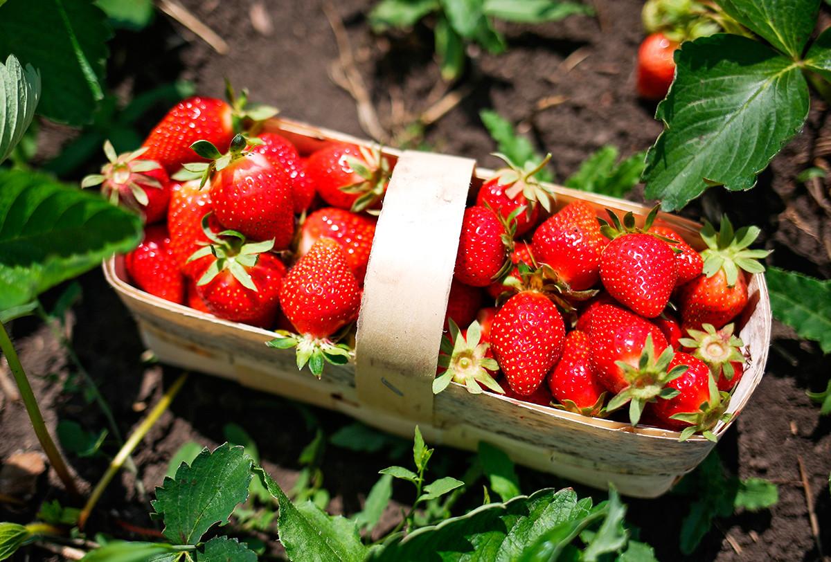 A lukoshko with berries.