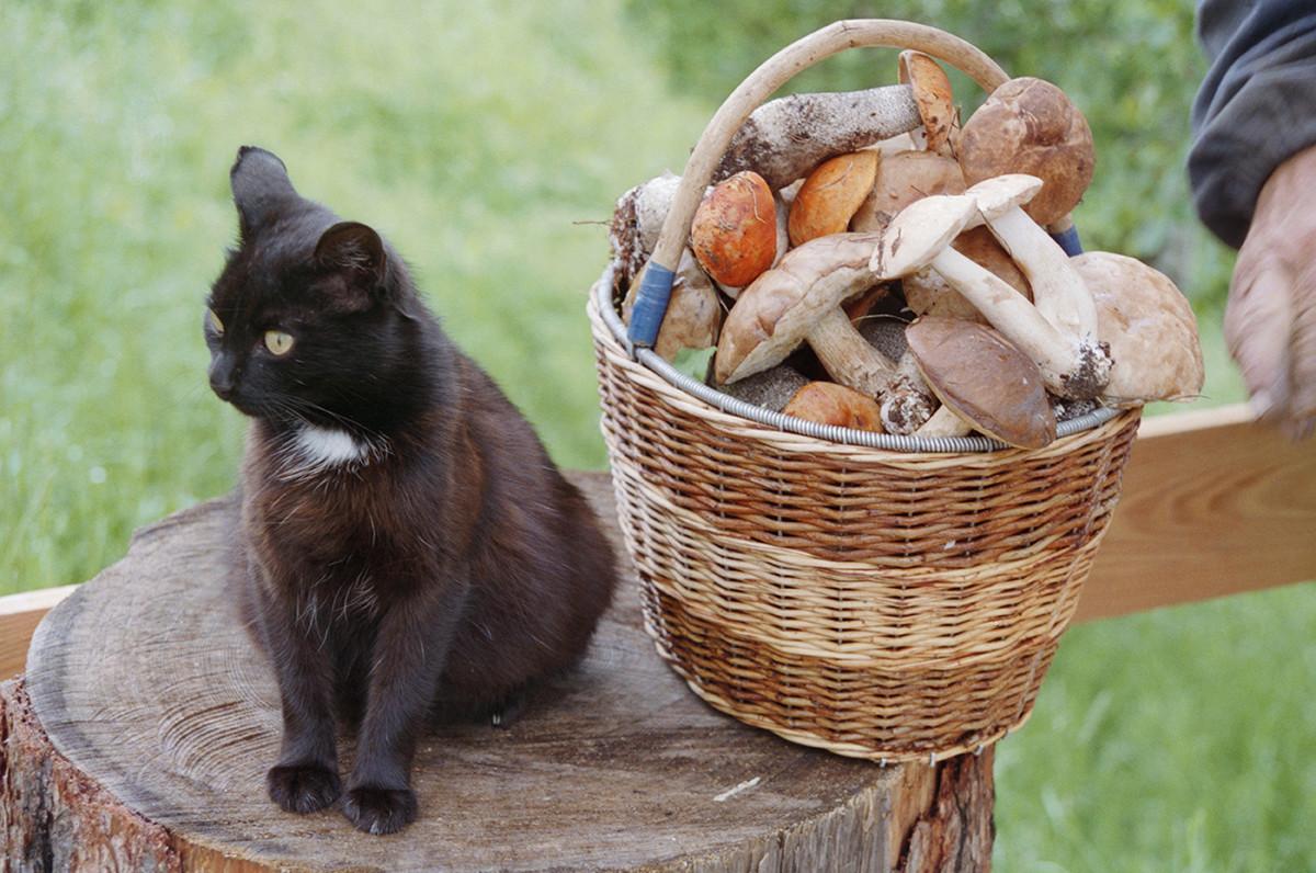 A lukoshko with mushrooms.