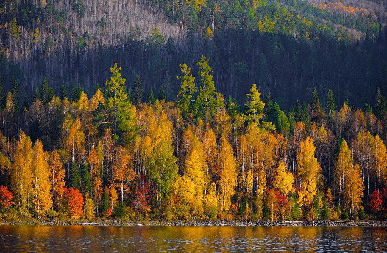 Musim gugur di Krasnoyarsk, Siberia.