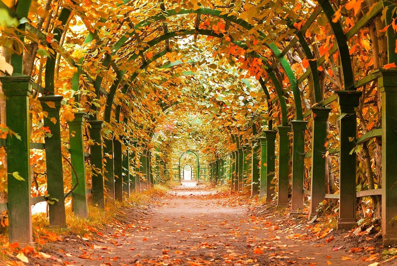 Musim gugur di taman Istana Peterhof, di luar kota Sankt Peterburg.