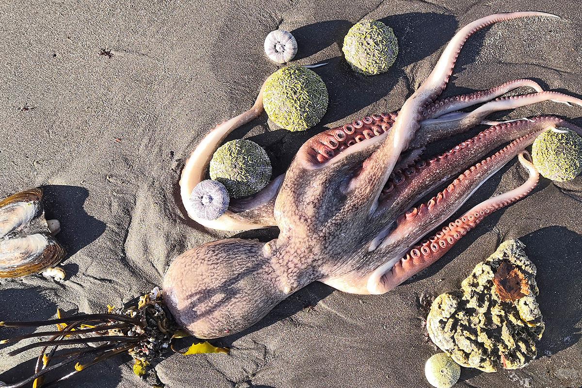 ハラクティルスキービーチにある海洋生物の死骸