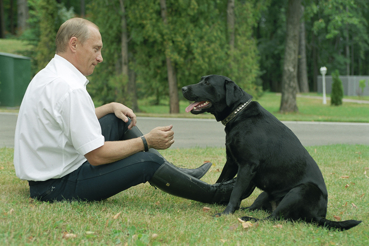 Putin bercengkrama dengan Koni, anjing labrador pemberian Menteri Pertahanan Shergey Shoygu.