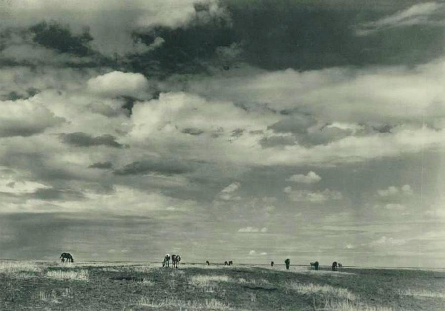 Ukrainian steppe