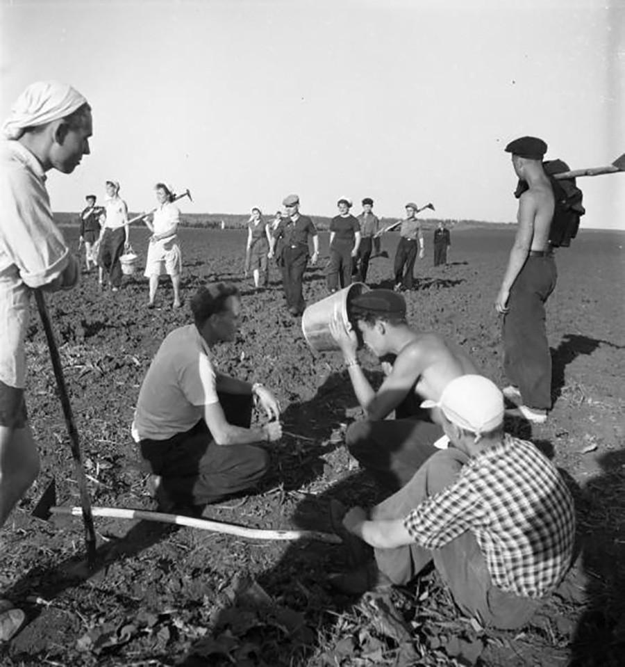 Para mahasiswa bekerja di ladang jagung di Tambovskaya Oblast, 1957.