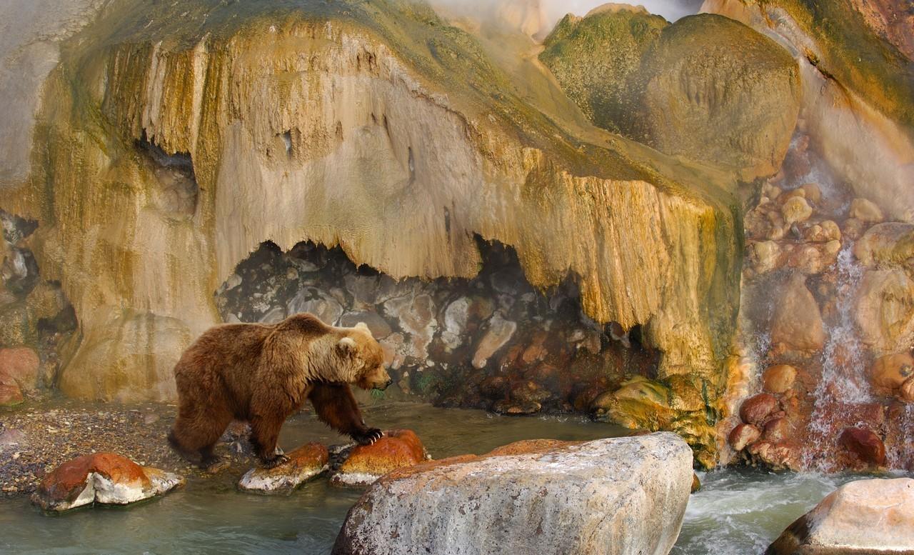 Oso en el valle de los Géiseres en Kamchatka