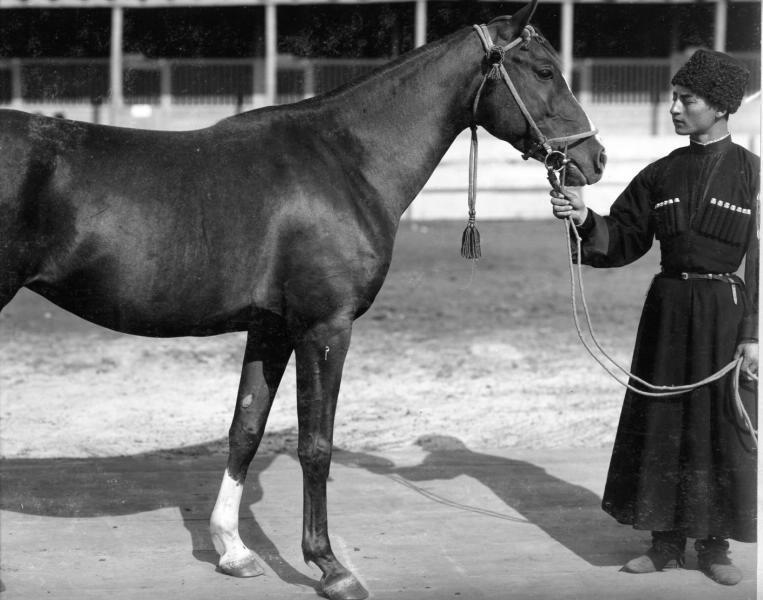 Мужчина в черкеске с газырями демонстрирует коня, которого хочет продать, 1900-ые