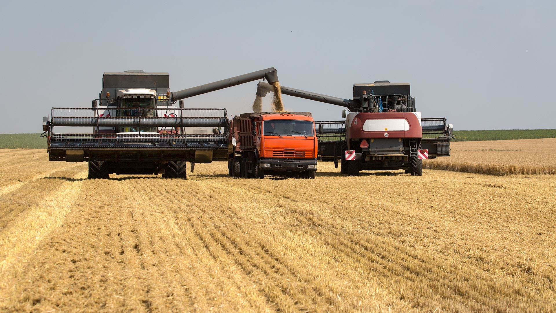 Harvesting combines in a wheat field.