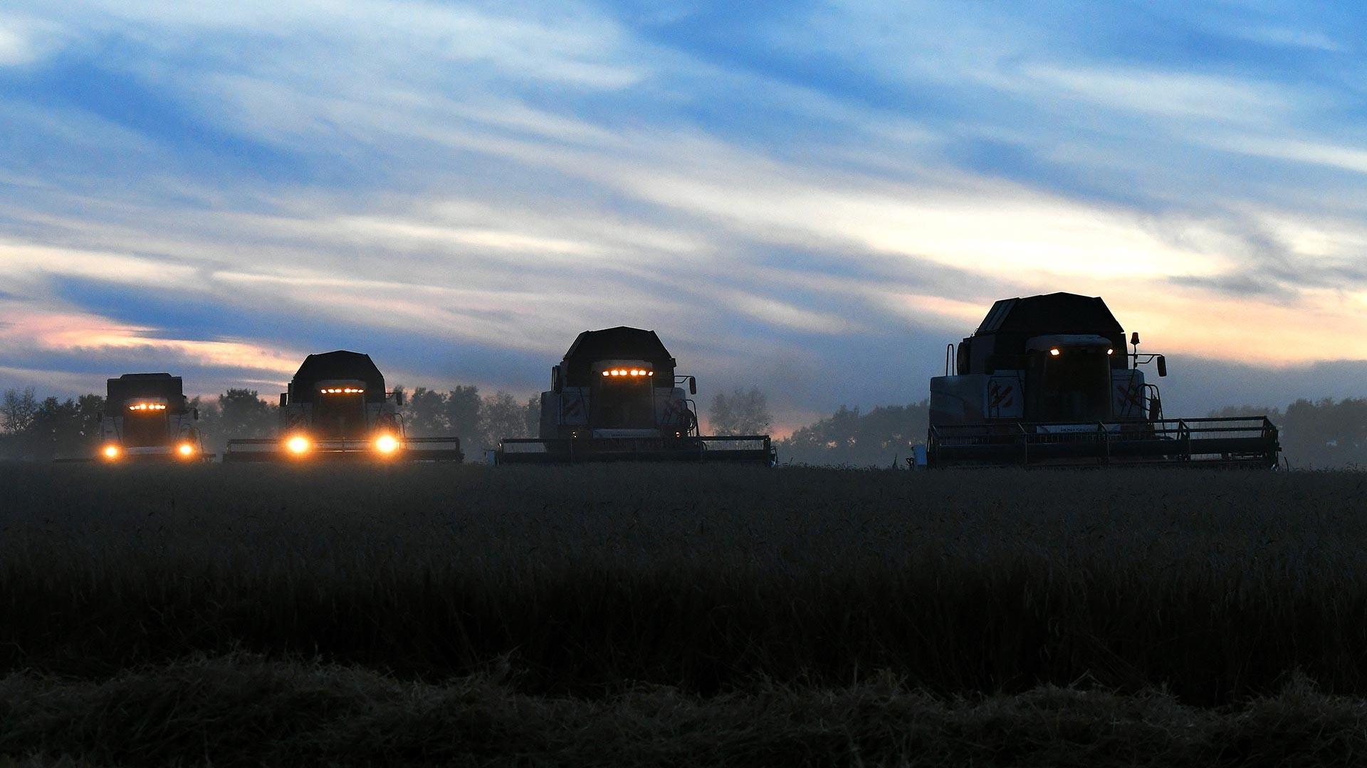 Уборка урожая пшеницы на полях ЗАО