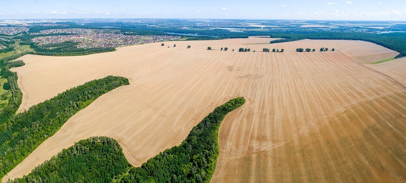 Пшеничное поле, вид сверху.