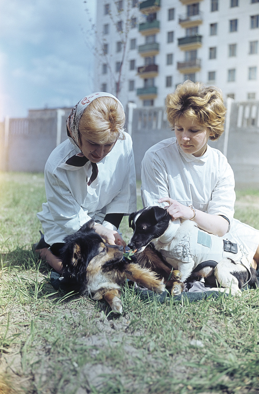 Пси Ветерок (десно) и Угољок у шетњи са лаборантима института ИМБП.