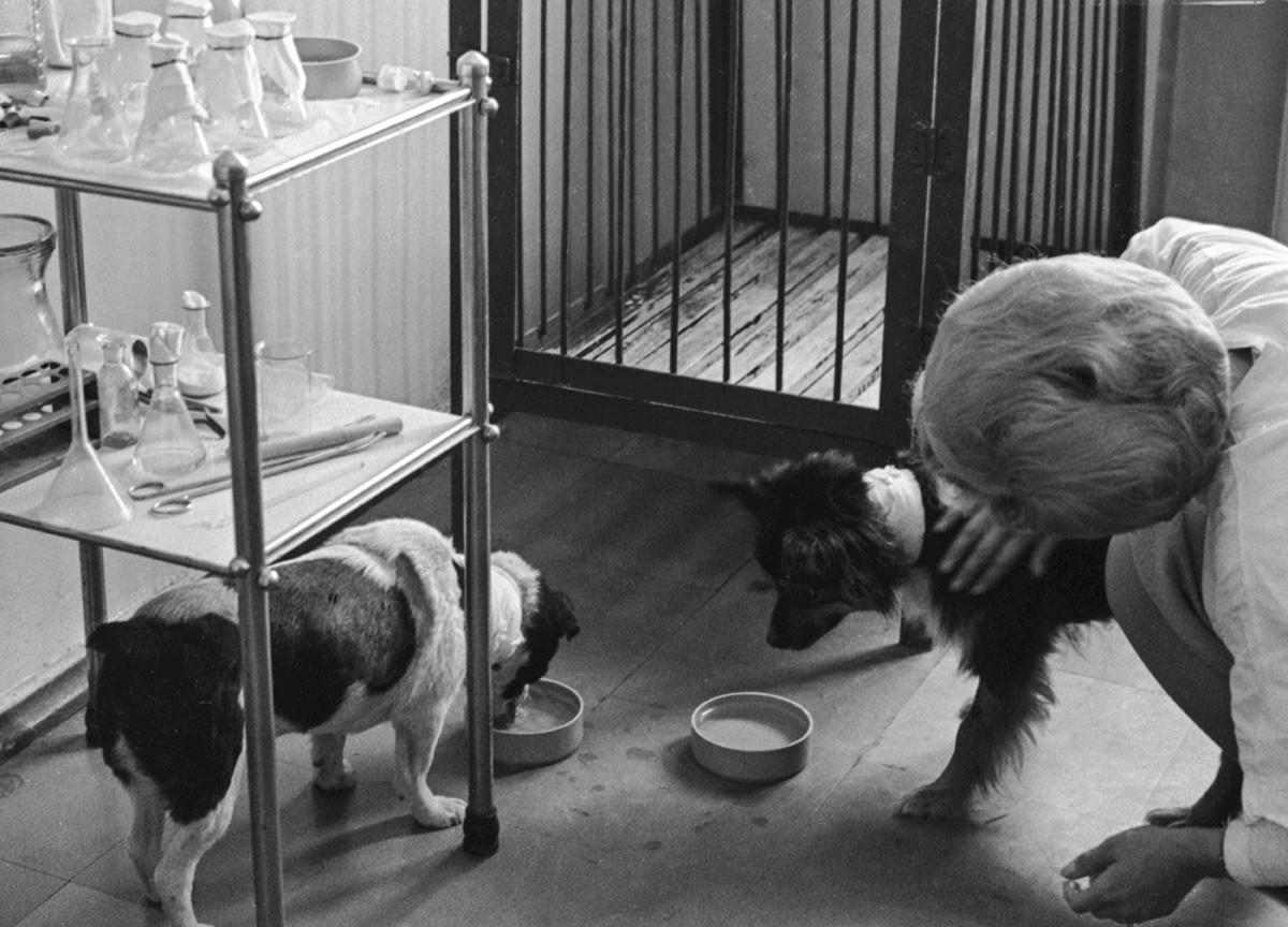 Psi Veterok i Ugoljok (slijeva nadesno) i veterinarka Irina Semeka u fazi oporavka pasa nakon leta u svemir. Svibanj 1966.