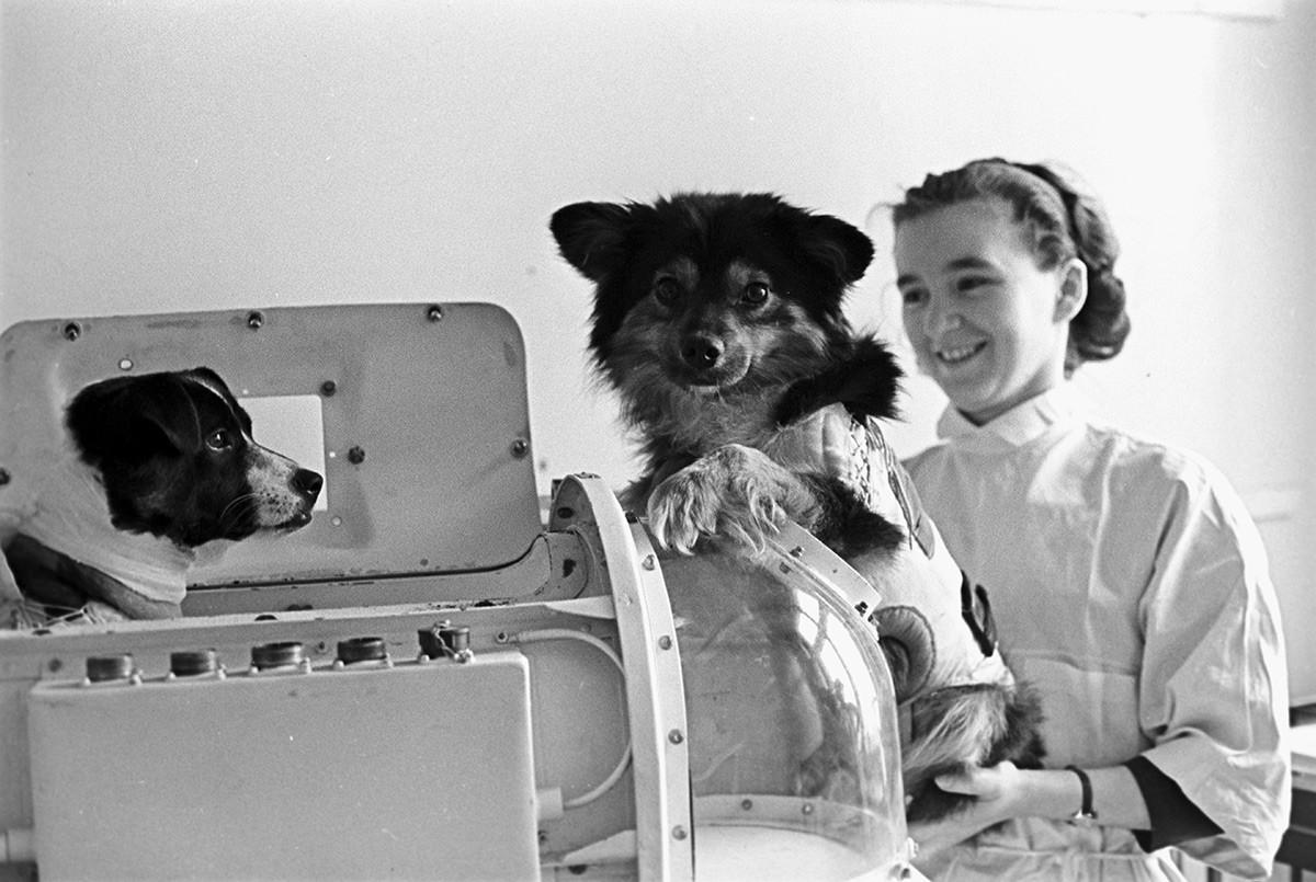 Psa v laboratoriju Inštituta za biomedicinske probleme