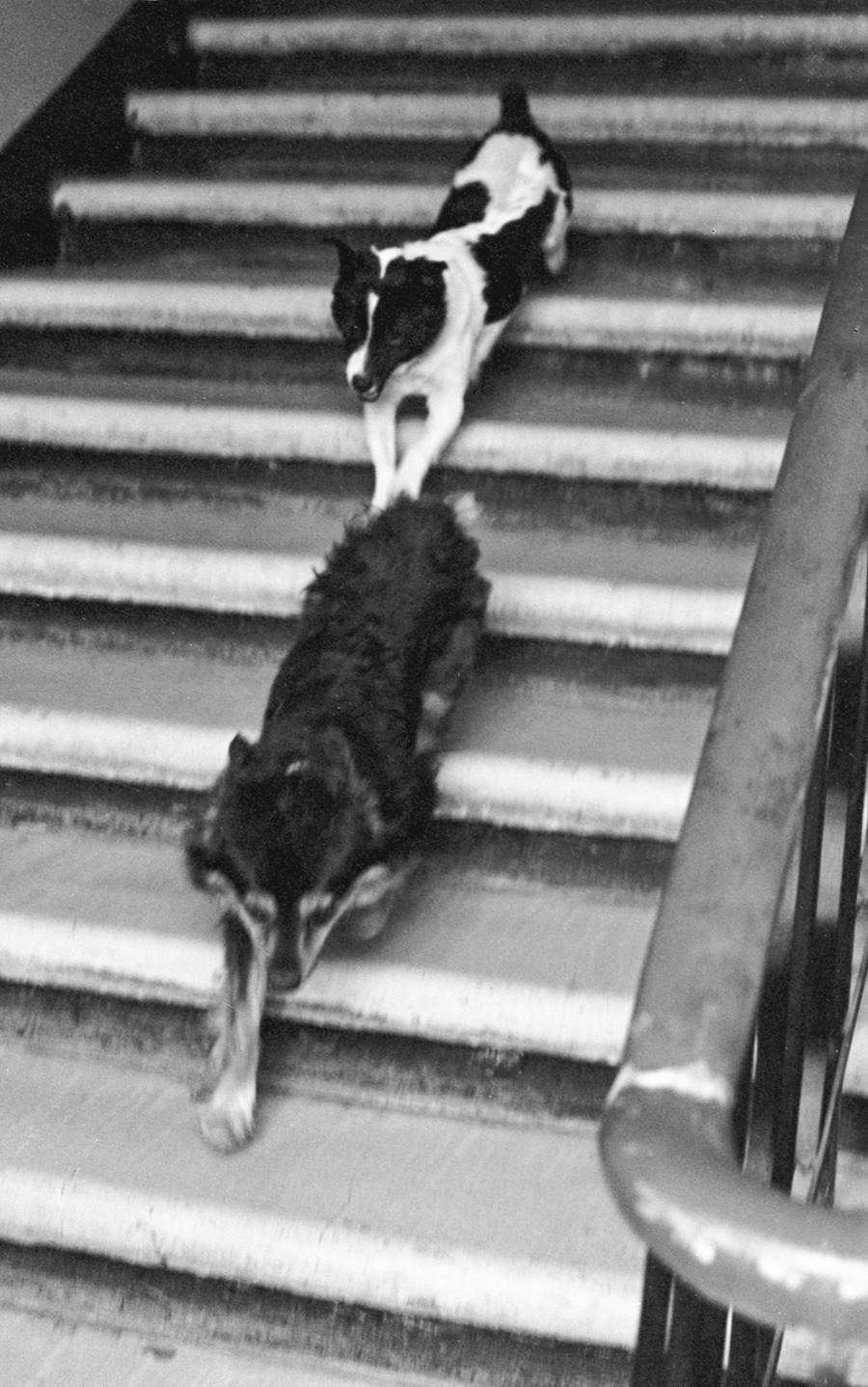 Ugoljok in Veterok med sprehodom. Maj, 1966