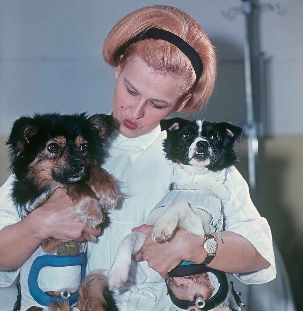 В ръцете на лаборанта Ирина, кучетата Ветерок (вдясно) и Уголок, които са направили космическо пътуване на биосателита