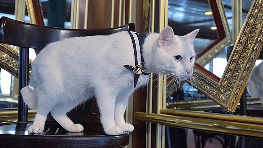 Le chat Achille