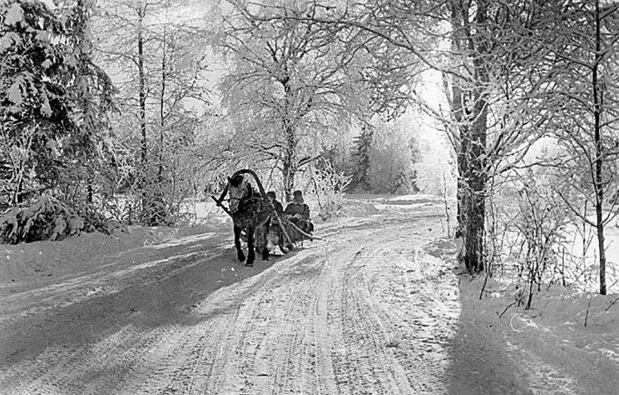 森の酷寒の朝、1950年代