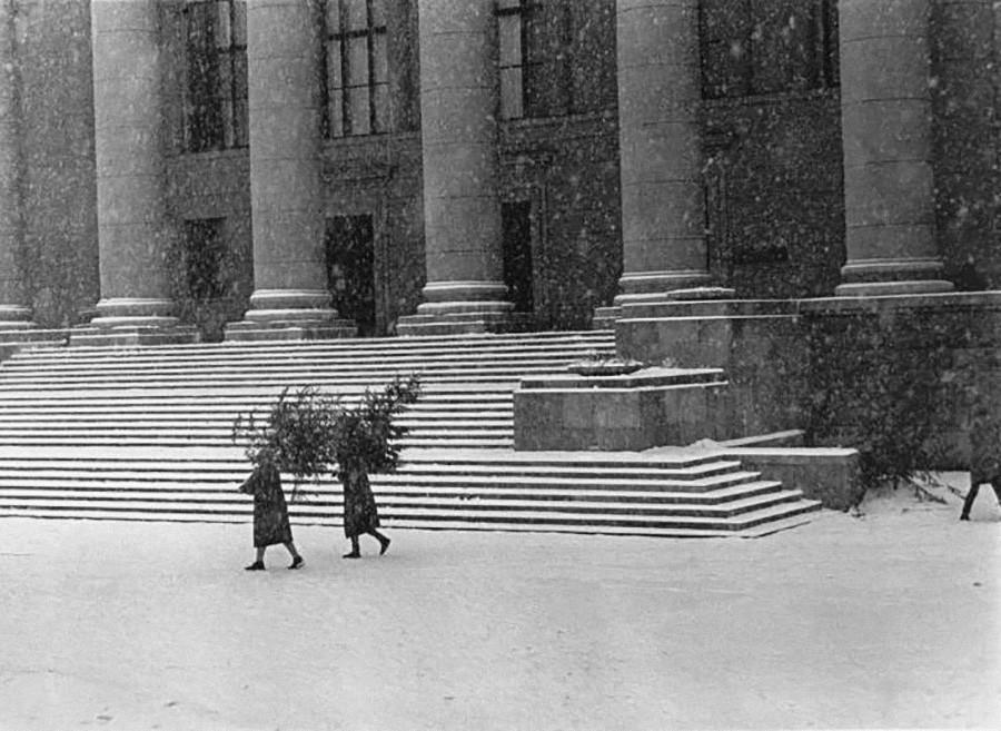 新年を前に。もみの木を運ぶ人、1960年