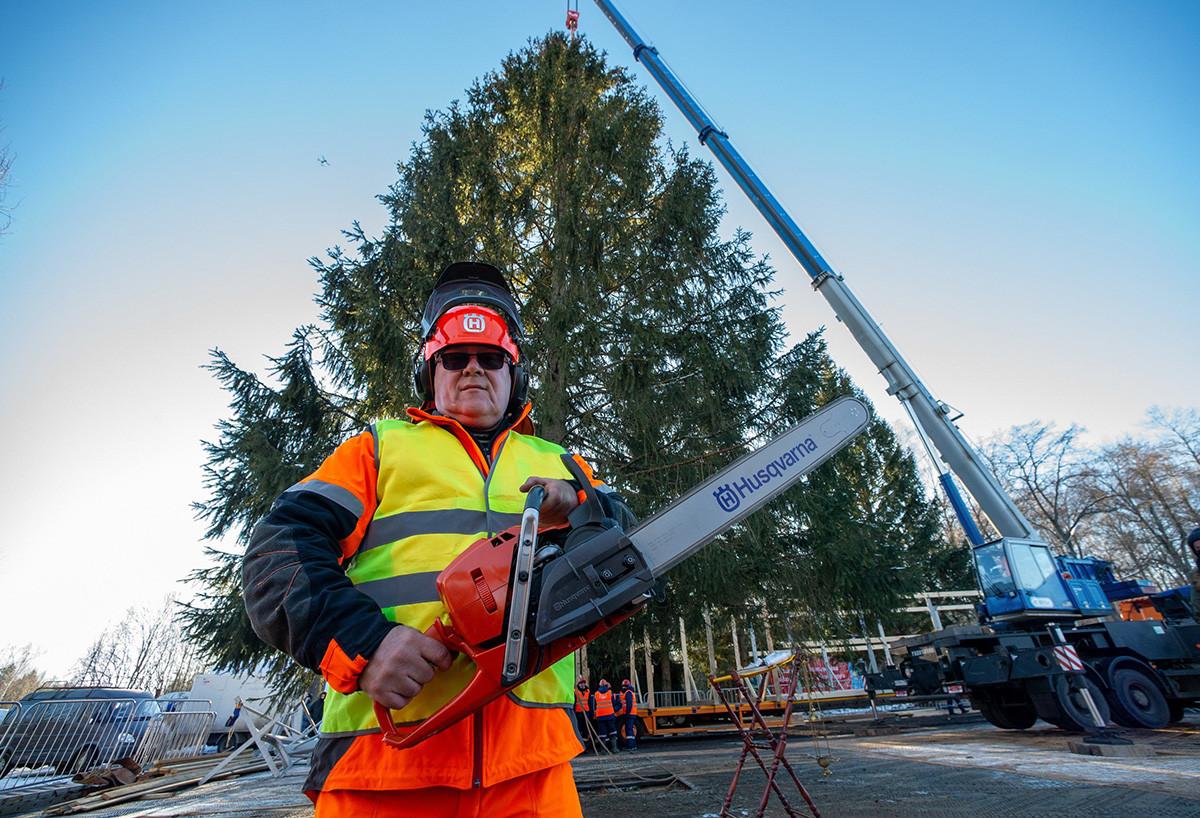 Отсичане на главното новогодишно дърво на Русия в Наро-Фоминско горско стопанство