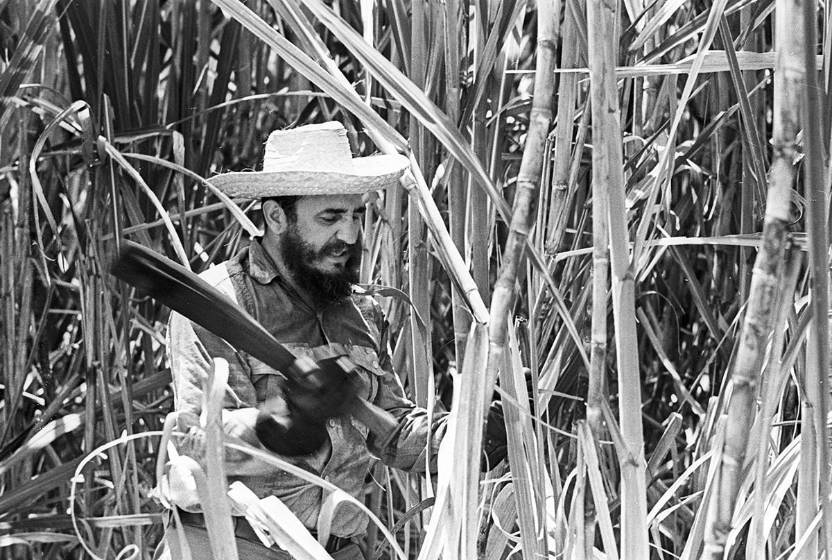 Pemimpin Kuba Fidel Castro sedang menebang tebu, Kuba, 1969.