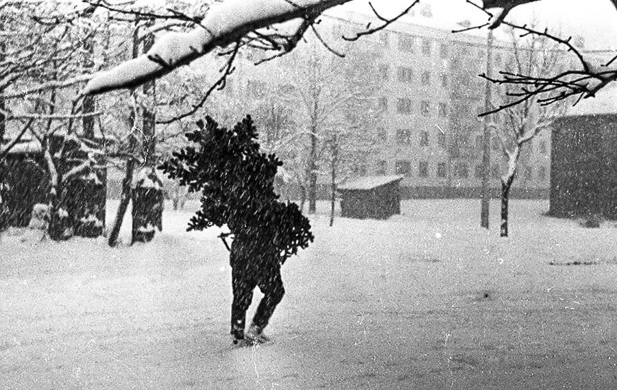 クリスマスツリーを家に運ぶ人