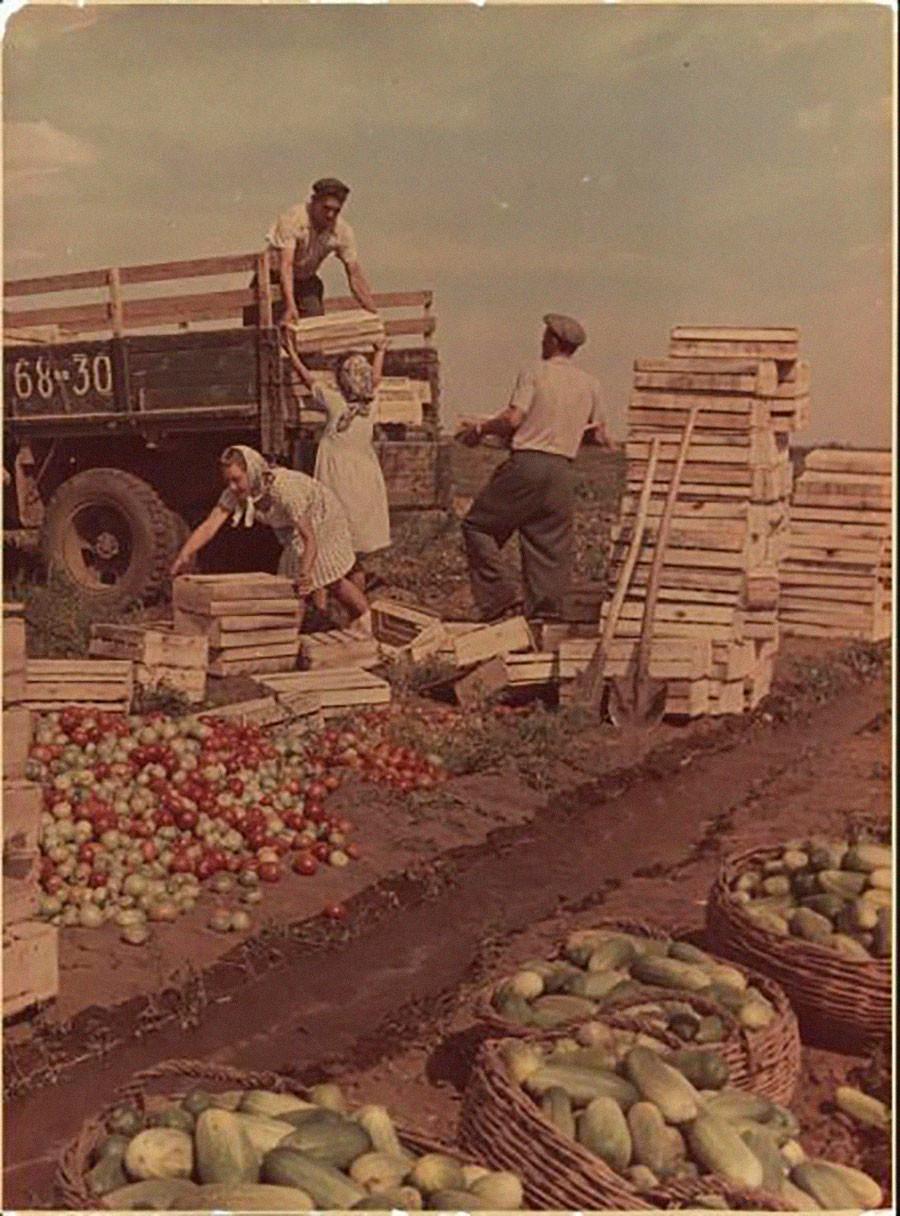 作物の収穫