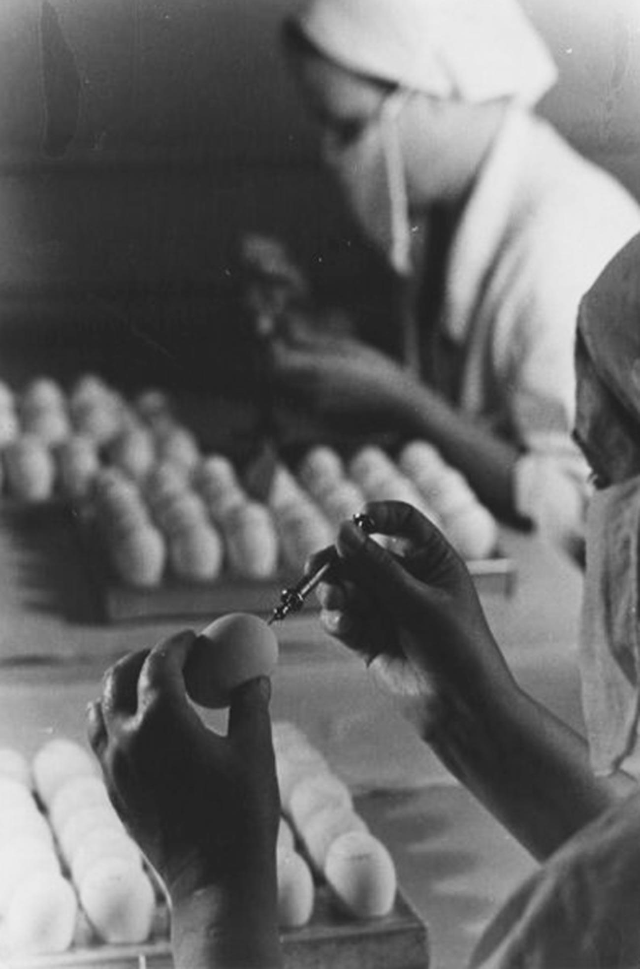 Tests de vaccination contre la grippe, années 1950