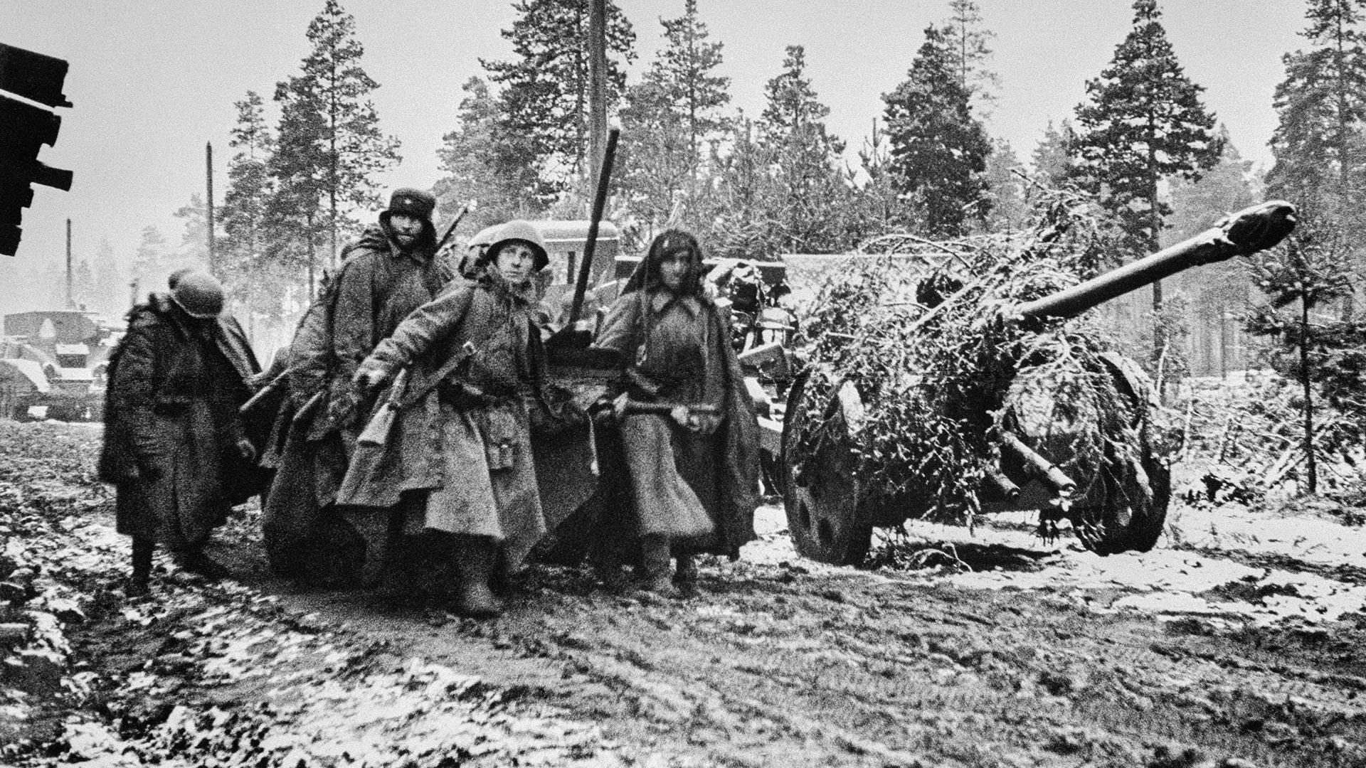 Des soldats soviétiques avec un canon divisionnaire F-22 camouflé près de Leningrad