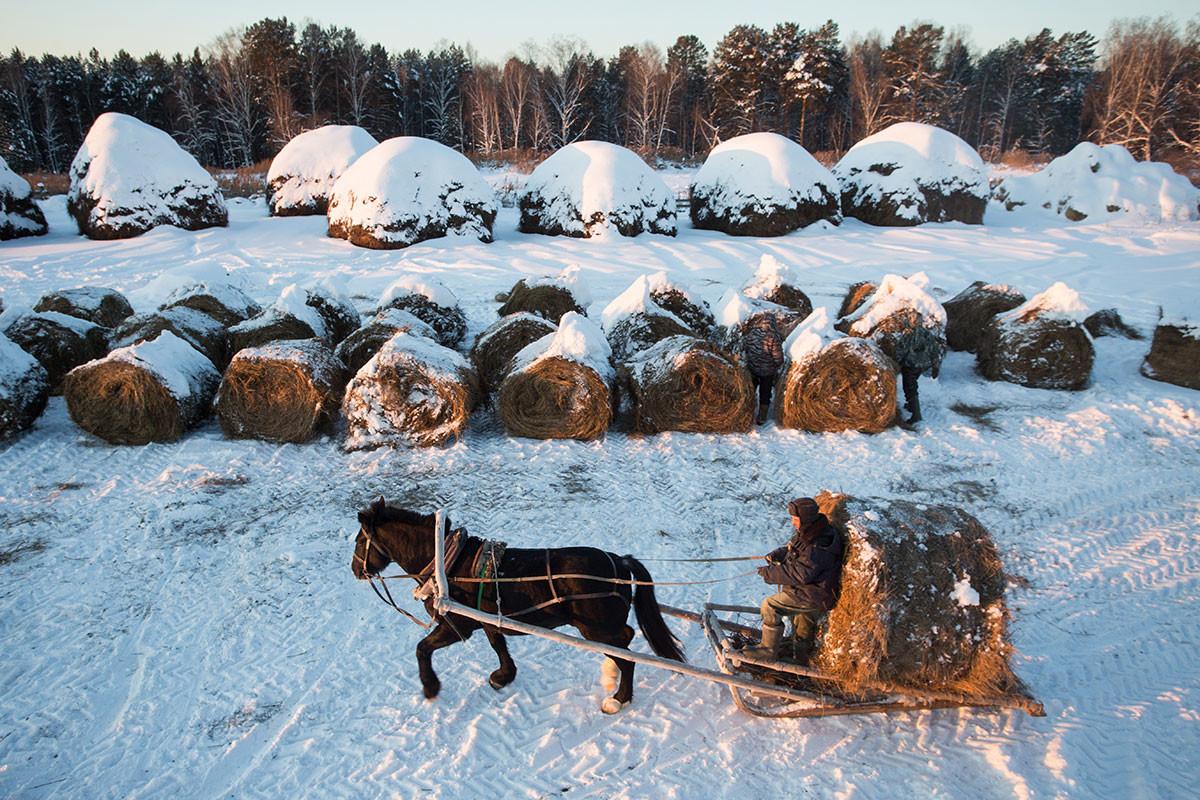 冬支度をするシベリア、ウナラ集落の人々