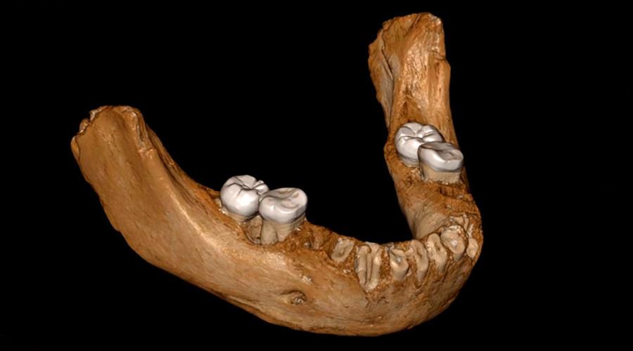 Rekonstruksi tulang rahang manusia Denisova.