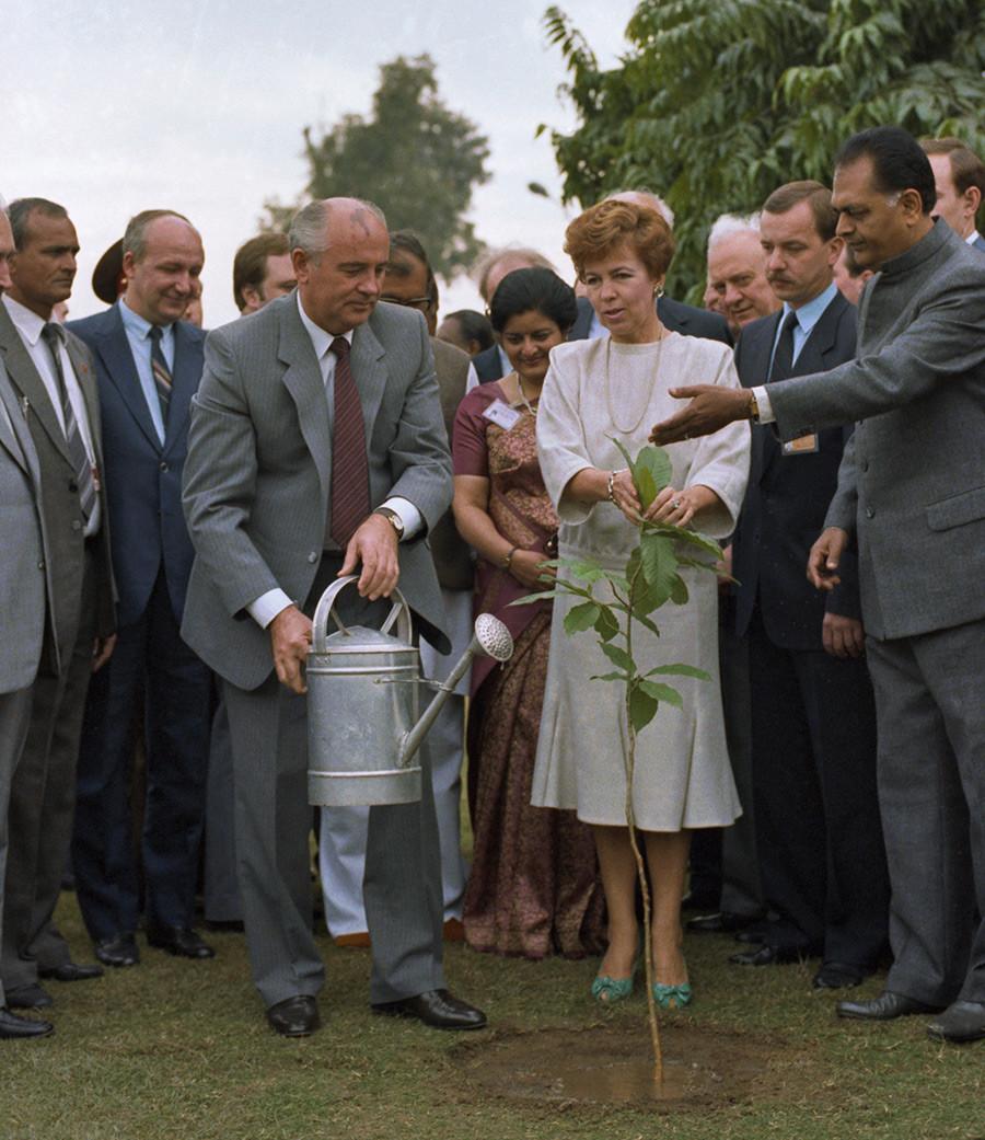 Michail Gorbatschow und seine Frau Raissa pflanzen einen traditionellen indischen Champaka-Baum während eines Besuchs in Indien, 26. November 1986.