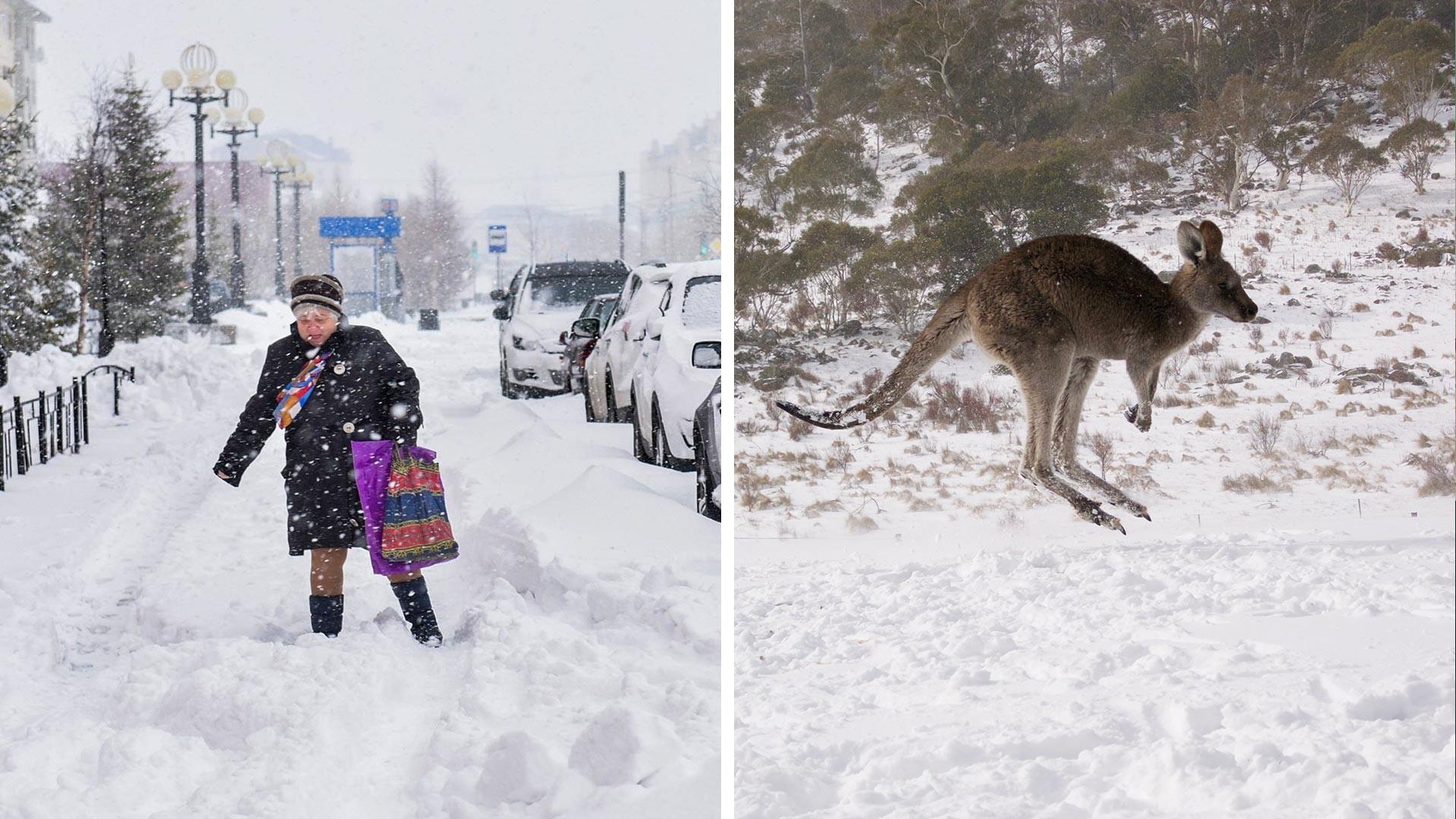 Hujan salju lebat di Salekhard pada akhir musim semi (kiri) dan seekor kanguru melompat di atas salju di Australia.