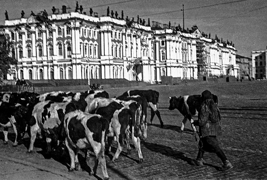 Le Palais d'Hiver à Leningrad et les paysans évacuant le bétail loin de la ligne du front