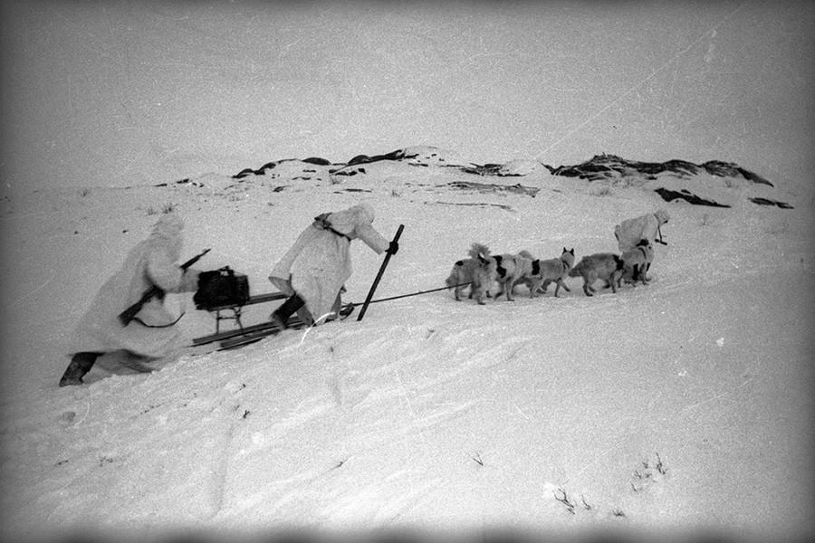 Des chiens militaires en mission dans l'Arctique