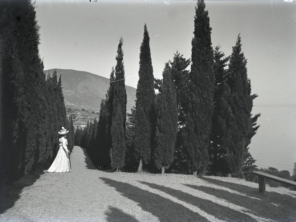 イトスギの間に立つ女性。1897年