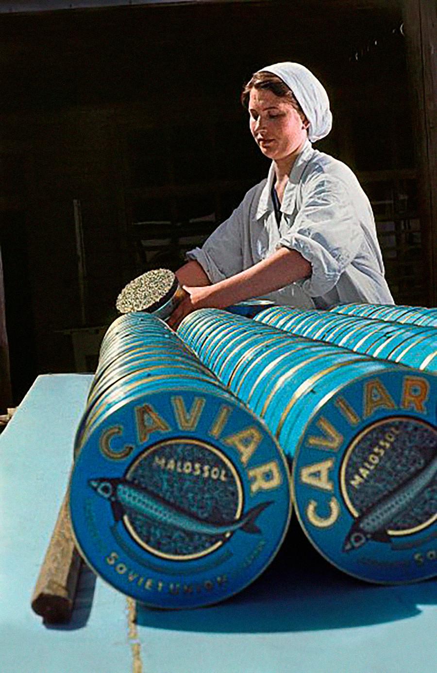 Una lavoratrice in una grande azienda di caviale nero ad Astrakhan, una città del Sud sul fiume Volga