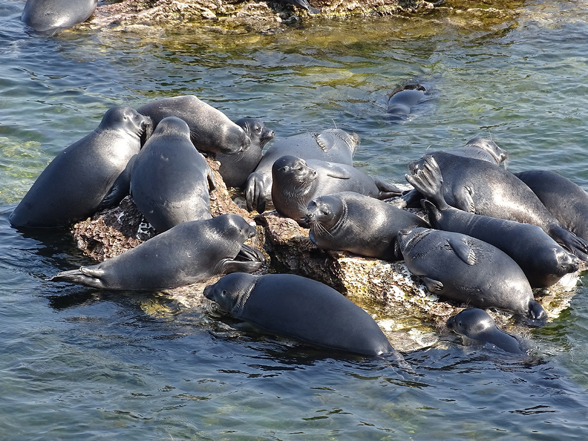 Cute seals are enjoying the sunny day.