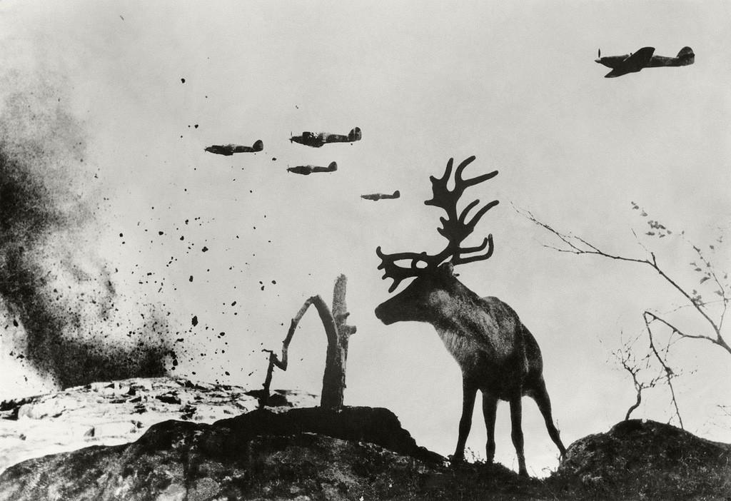 Région subarctique. Le renne Iacha, 1941
