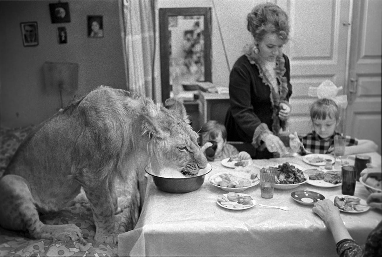Pet lion King at the dinner table with the entire Berberov family