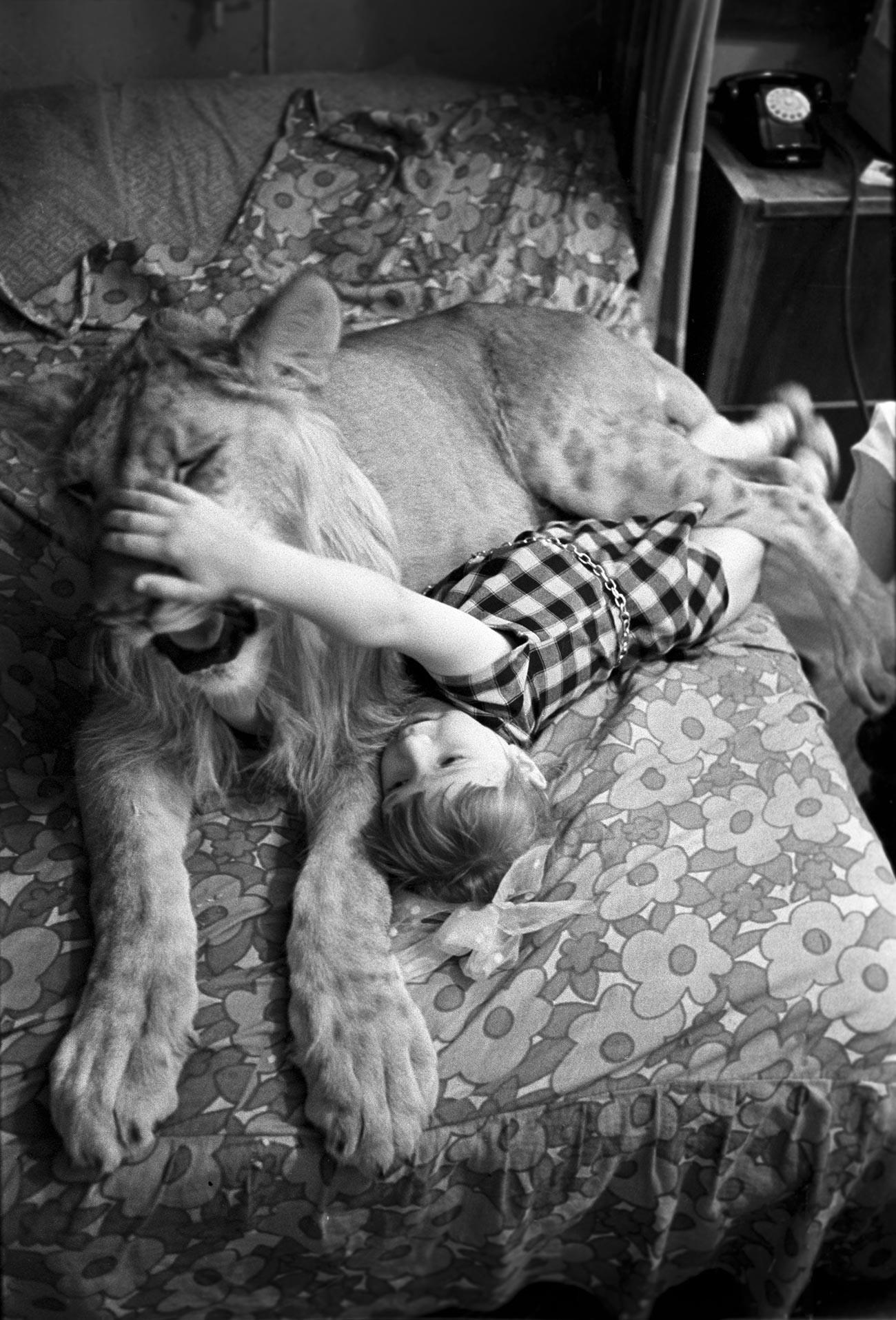 Udomačeni levji kralj s hčerko arhitekta Leva Berberova - Evo