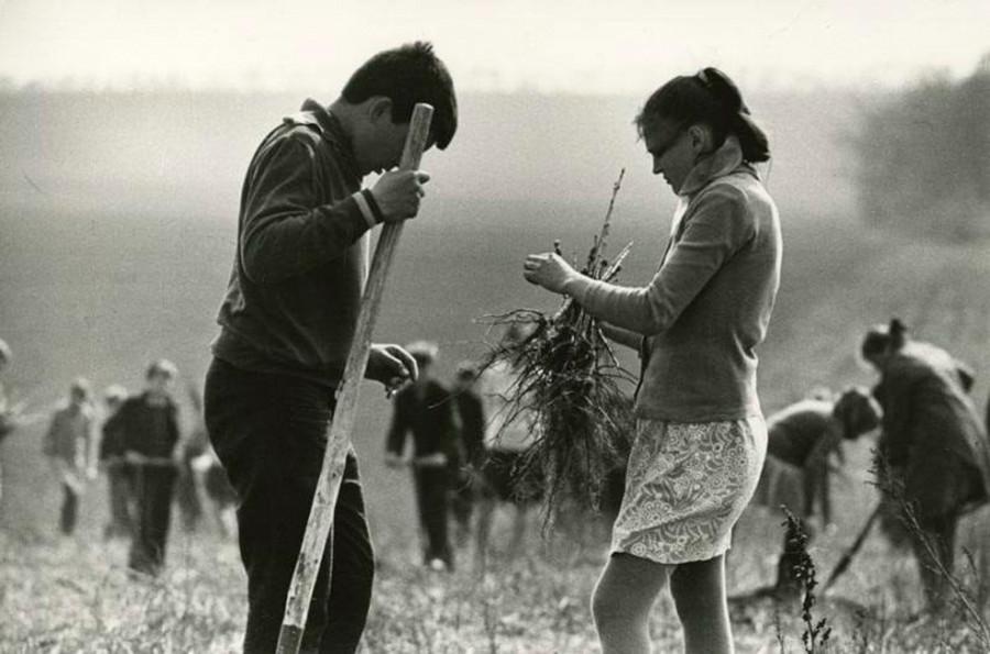 Des écoliers plantant des arbres au printemps, 1972