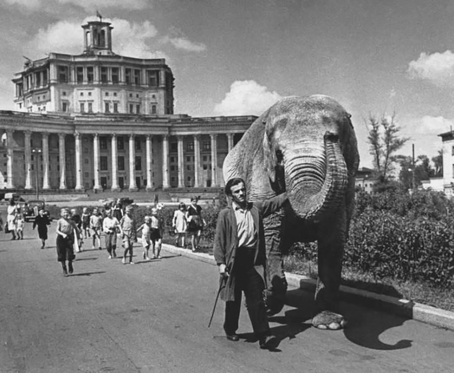 「象を連れて・・・」