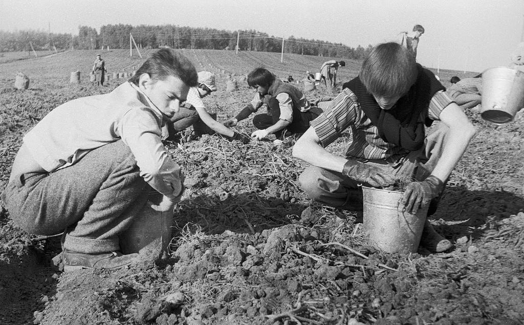 """Studenti durante il """"subbotnik"""": la raccolta delle patate"""