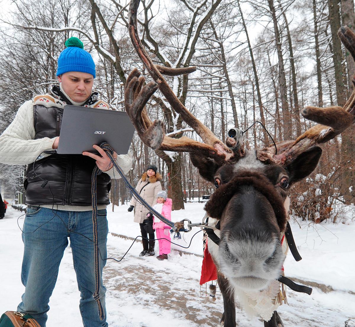 Un homme installant une petite webcam sur la tête d'un renne pour montrer un jour dans la vie de l'animal à travers ses propres yeux