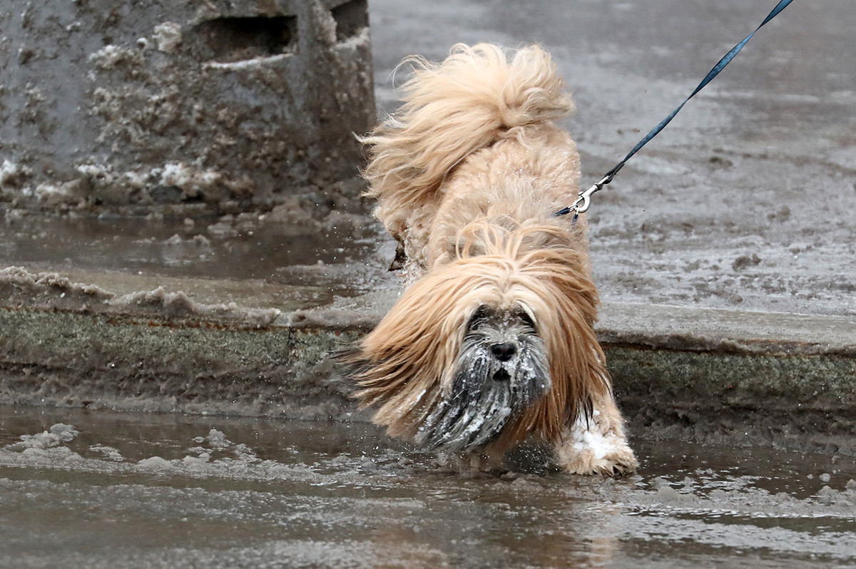 Russia. Moscow. A dog on one of the streets of the city