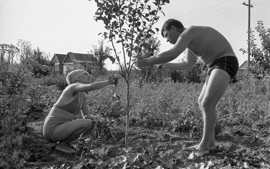 Al lavoro nel giardino di una dacia