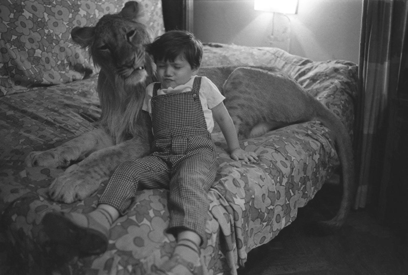 Hauslöwe King mit dem Sohn des Architekten.
