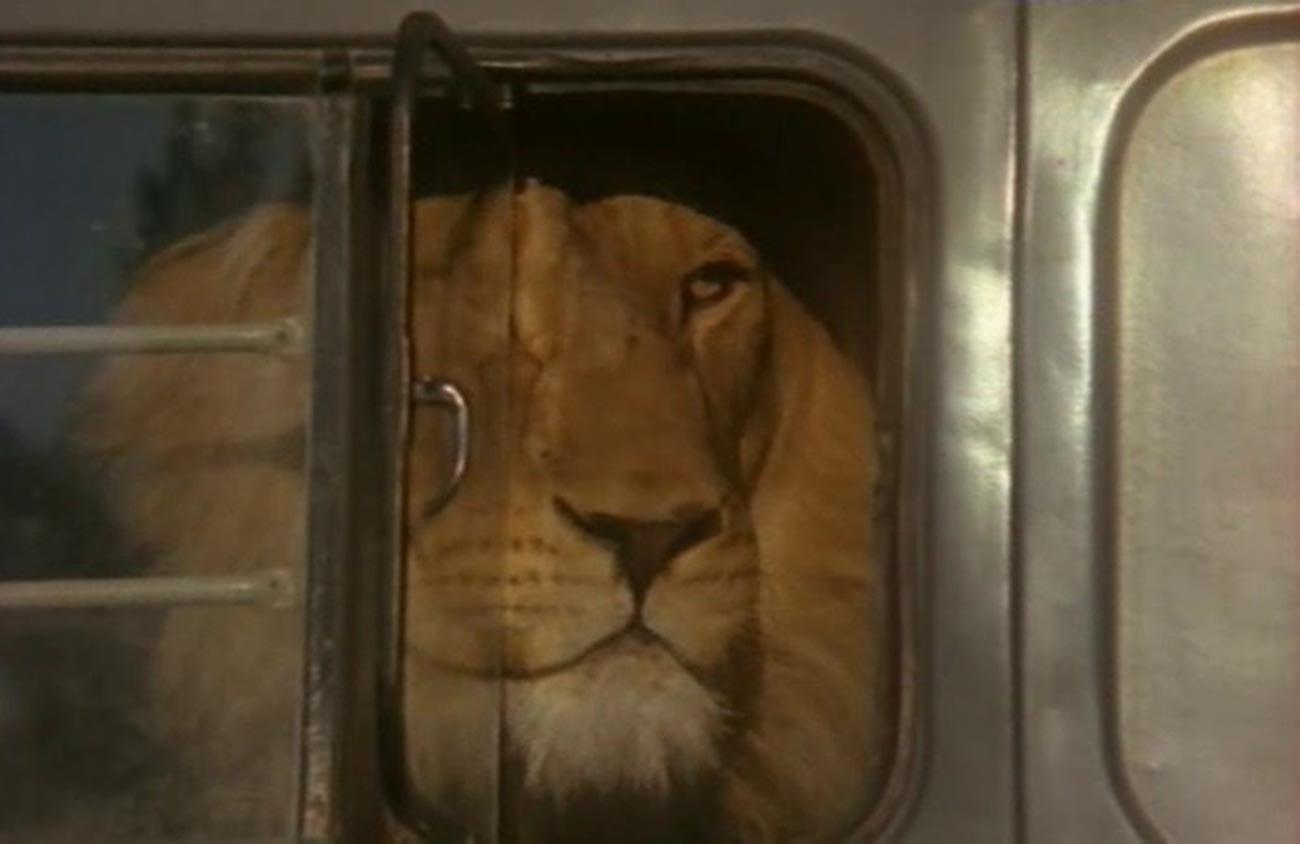 """Eine Szene aus dem Film """"Der Löwe ist von zu Hause weggegangen""""."""